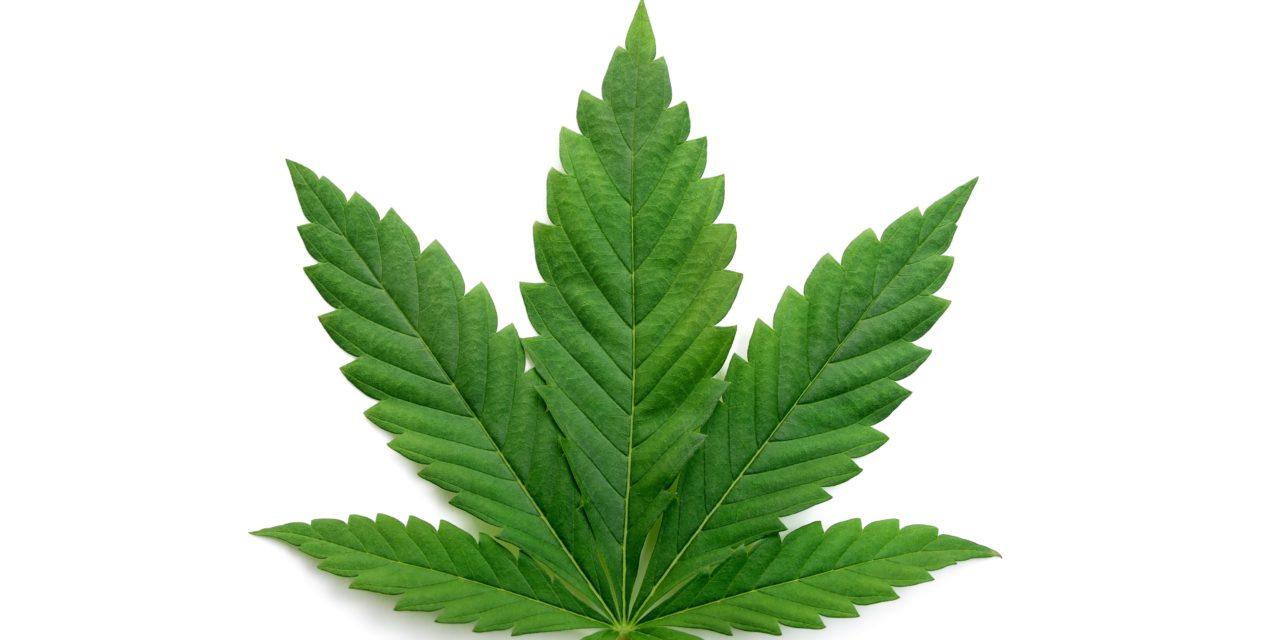 Health: National Cannabis Awareness Month, April 2021, healing potential of CBD